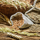 Nutrition Experts Get to the Truth About Whole Grains and Diet
